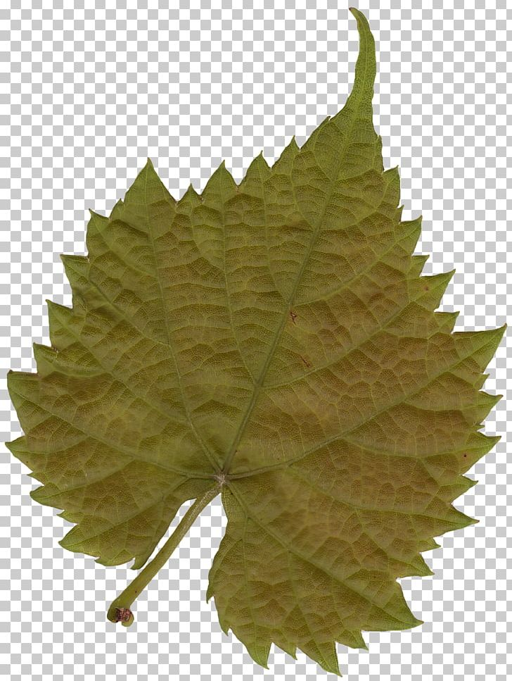 Leaf Texture Mapping Tree Color PNG, Clipart, 3d Computer Graphics