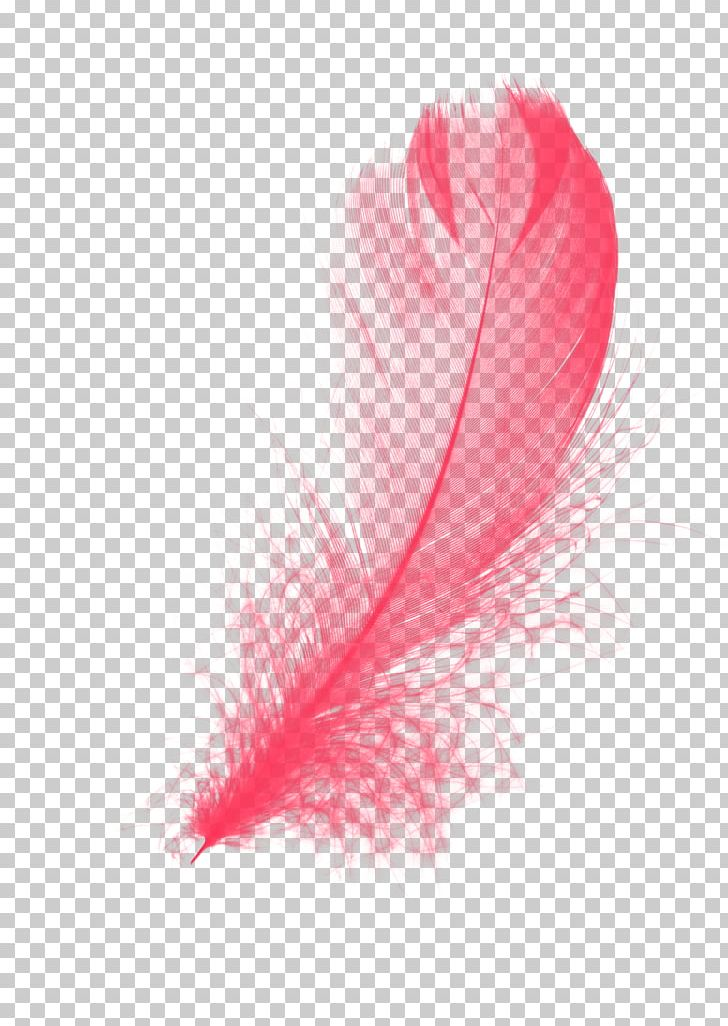Feather PNG, Clipart, 3d Computer Graphics, Adobe Flash Player, Animals, Drawing, Feather Free PNG Download