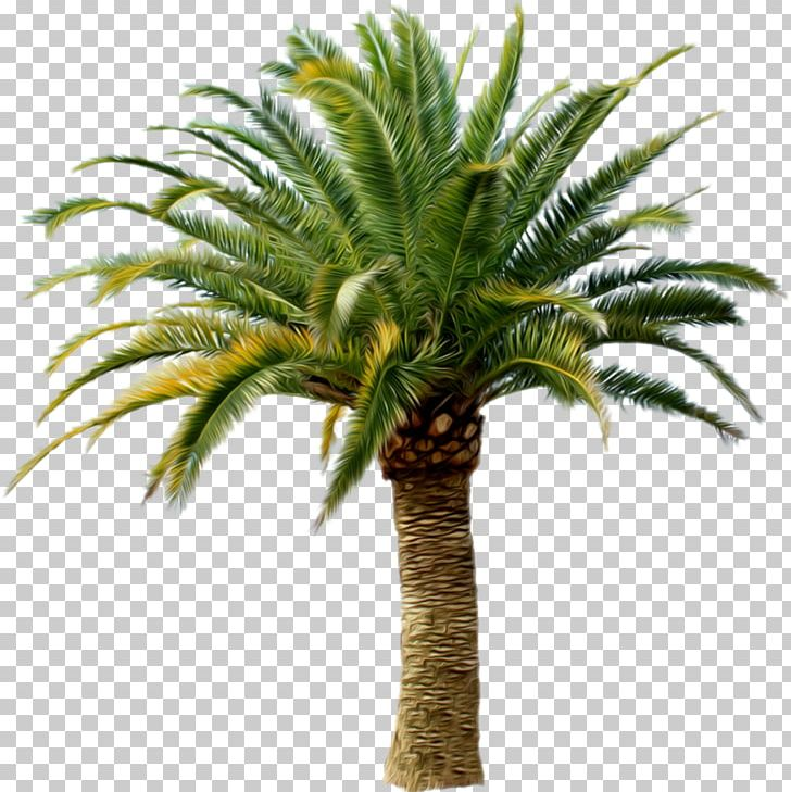 Palm Trees Transparency Portable Network Graphics PNG, Clipart, Arecales, Attalea, Attalea Speciosa, Clip Art, Coconut Free PNG Download
