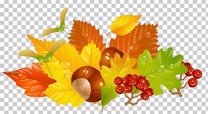 Autumn Leaf Color PNG, Clipart, Acorn, Autumn, Autumn Leaf Color, Chestnuts, Clipart Free PNG Download