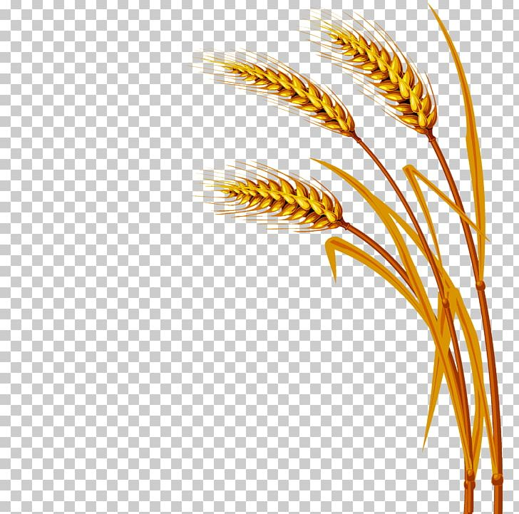Wheat PNG, Clipart, Agriculture, Cereal, Commodity, Ear, Encapsulated Postscript Free PNG Download