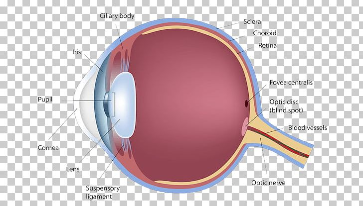 Blind Spot Of Human Eye