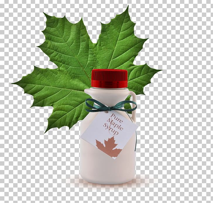 Maple Leaf Cream Cookies Maple Syrup Png Clipart Aquifoliaceae