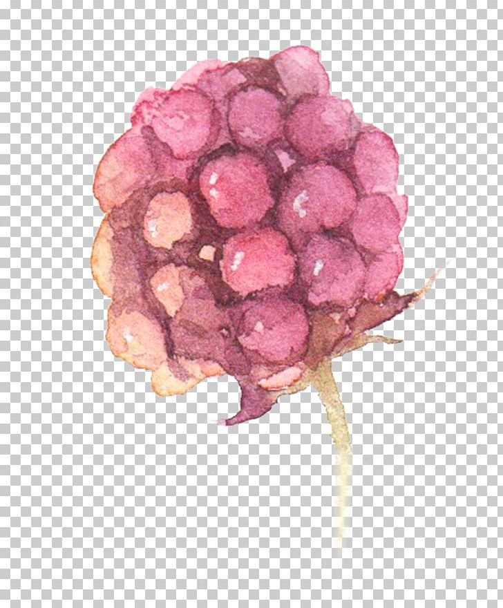 Watercolor: Flowers Watercolor Painting Grape PNG, Clipart, Berry, Designer, Download, Euclidean Vector, Flower Free PNG Download