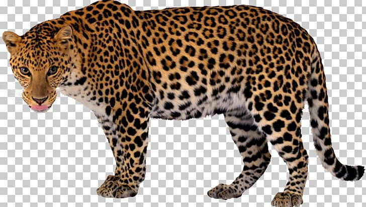 Leopard Jaguar Cheetah PNG, Clipart, Animal Print, Animals
