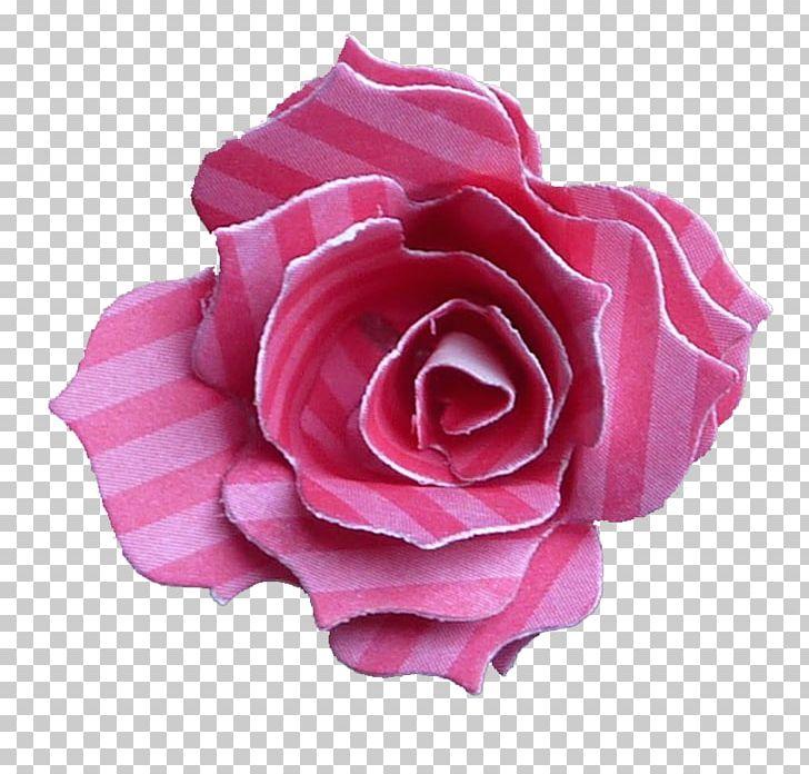 Garden Roses Centifolia Roses Floribunda Cut Flowers Petal PNG, Clipart, Centifolia Roses, China Rose, Flower, Flowering Plant, Gard Free PNG Download
