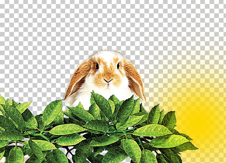 Domestic Rabbit Hare Leaf PNG, Clipart, Animal, Animals, Autumn Leaves, Banana Leaves, Deciduous Free PNG Download