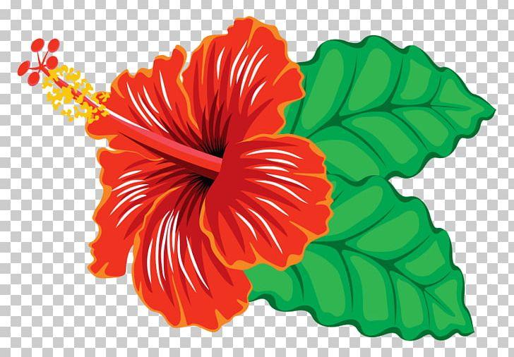 Hibiscus Schizopetalus Yellow Hibiscus Hawaiian Hibiscus Png