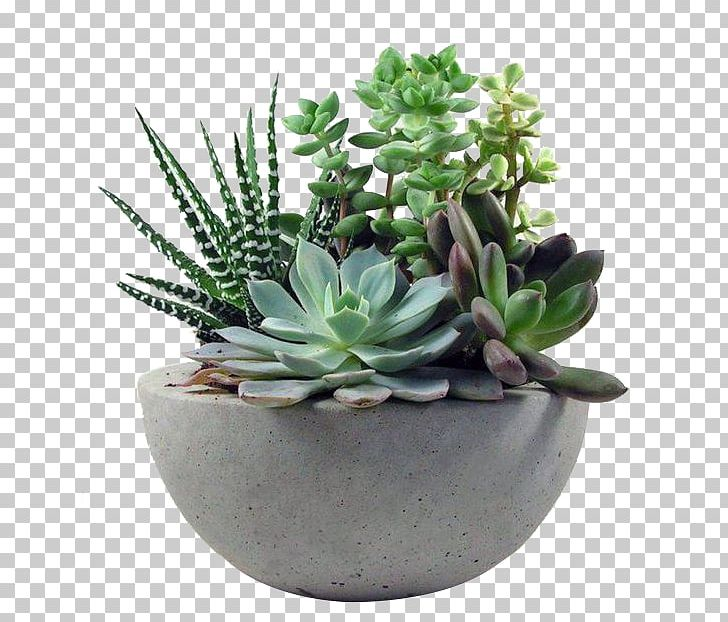Succulent Plant Gardening Flower PNG, Clipart, Cactaceae, Cactus, Fleshy, Floral Design, Floristry Free PNG Download