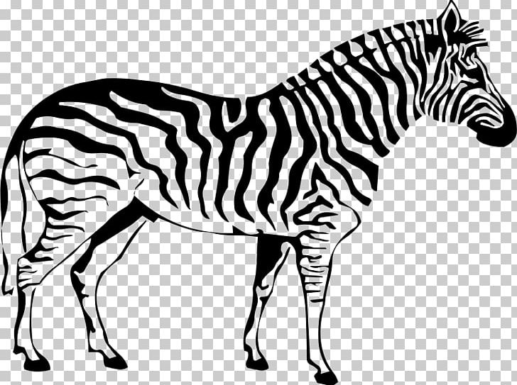 Coloring Book Zebra Drawing Stripe Adult PNG, Clipart, Adult ...