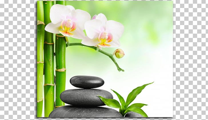 body to body massage trier