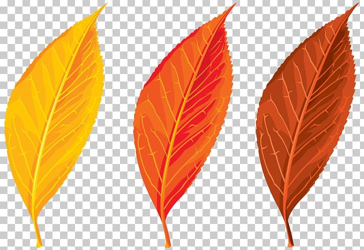 Autumn Leaf Color PNG, Clipart, Art, Autumn, Autumn Leaf Color, Autumn Leaves, Blog Free PNG Download