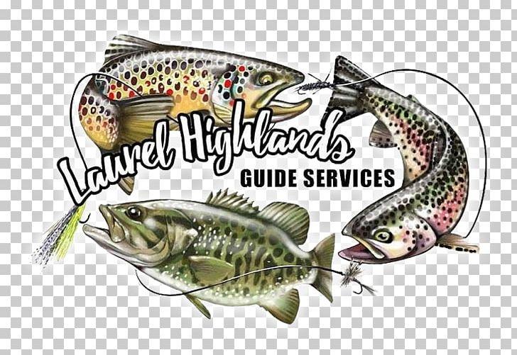 Fishing Bait Youghiogheny River Trout Laurel Highlands PNG