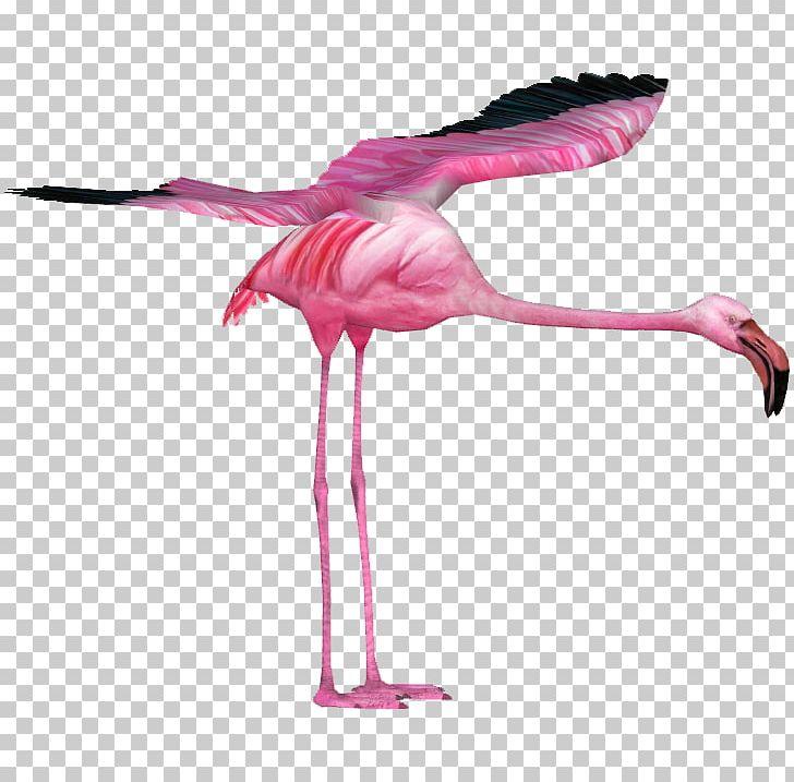 Water Bird Vertebrate Beak Feather PNG, Clipart, Animal, Animals, Beak, Bird, Feather Free PNG Download
