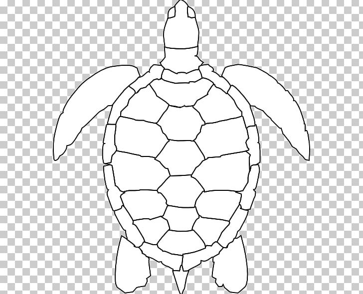 Green Sea Turtle Drawing PNG, Clipart, Animal, Area ...