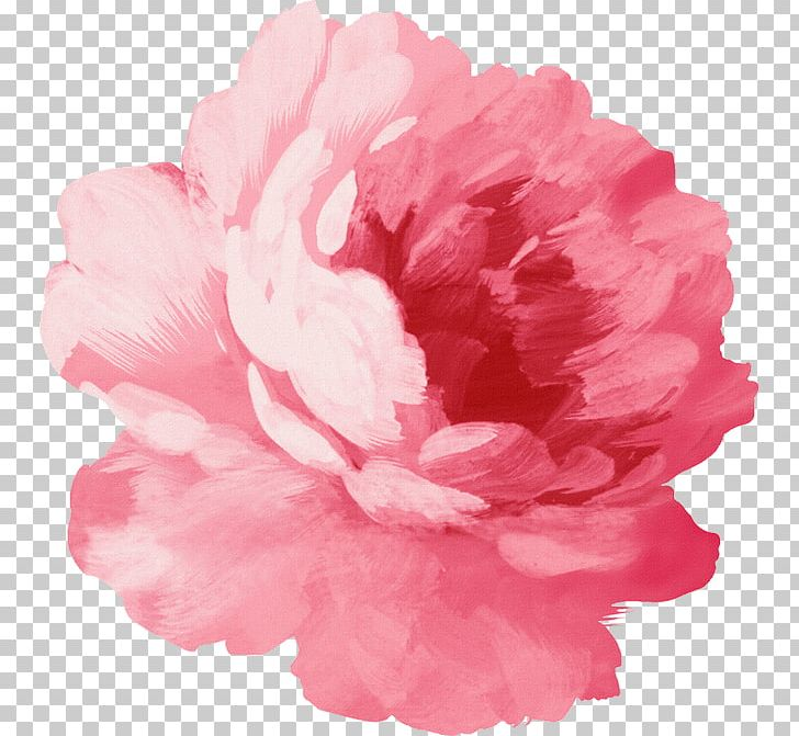 This is a graphic of Breathtaking Pink Carnation Drawing