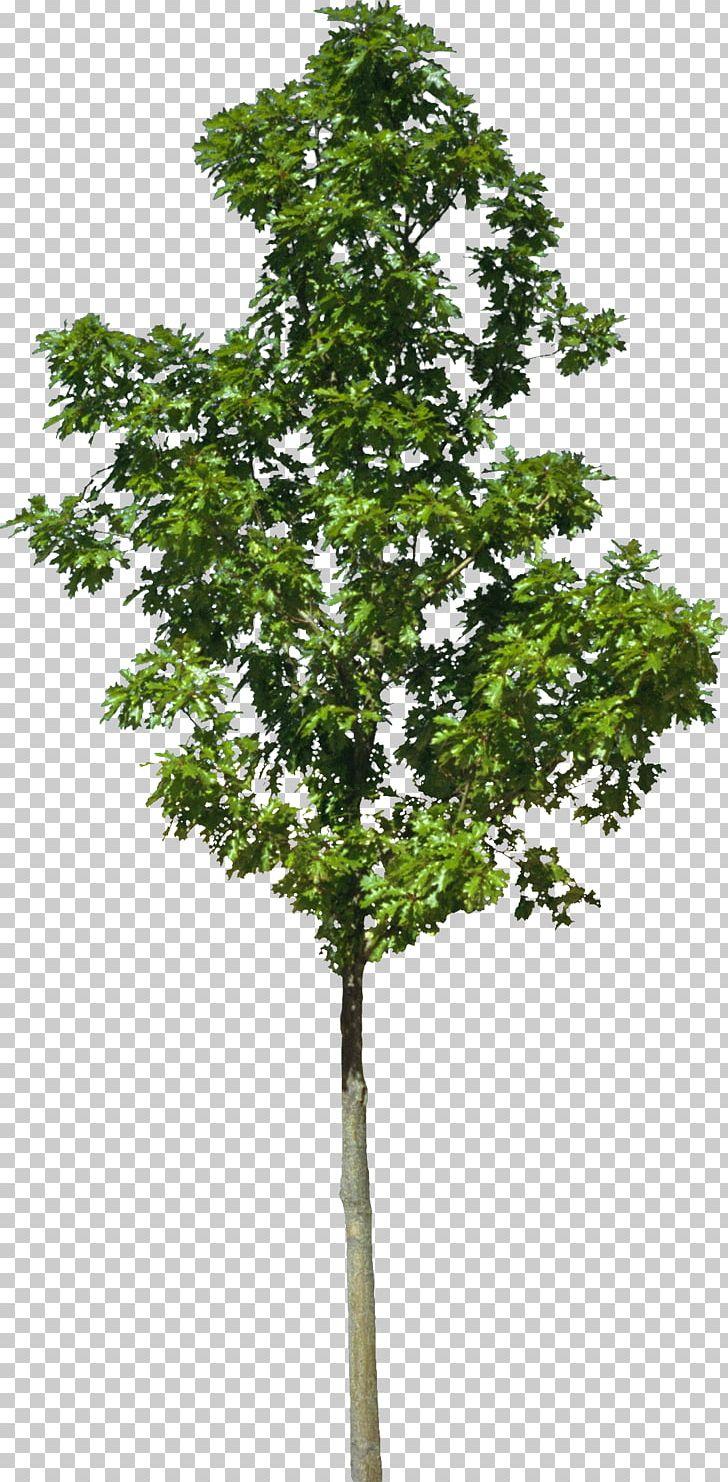 Tree Stock Photography Landscape Architecture Deciduous PNG, Clipart, Agac, Agac Resimleri, Architecture, Branch, Deciduous Free PNG Download