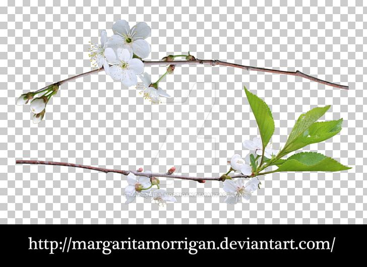 Liana Plants Portable Network Graphics Tree PNG, Clipart, Blog, Blossom, Branch, Cherry Blossom, Cmyk Color Model Free PNG Download