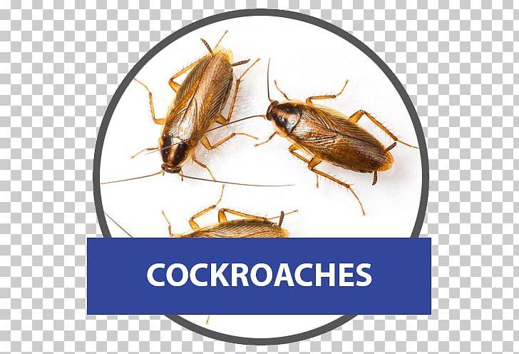 German Cockroach American Cockroach Pest Control PNG, Clipart, American Cockroach, Animals, Arthropod, Blattella, Blattella Asahinai Free PNG Download