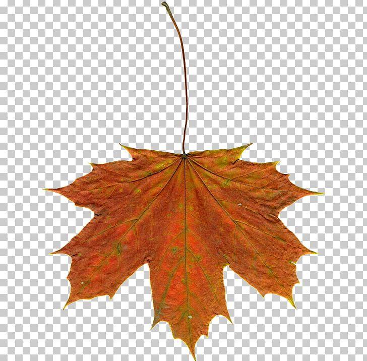 Autumn Leaf Color Maple Leaf PNG, Clipart, Autumn, Autumn Leaf Color, Autumn Leaves, Download, Leaf Free PNG Download