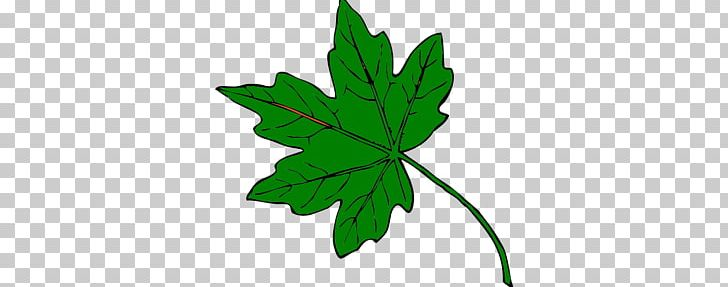 Maple Leaf Green PNG, Clipart, Autumn, Autumn Leaf Color, Color, Flowering Plant, Green Free PNG Download