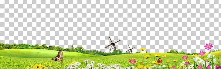 Green Safflower Google S PNG, Clipart, Background Vector, Butter, Computer Wallpaper, Farm, Flower Free PNG Download