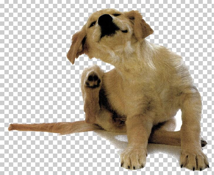 Dog Allergy Allergen Itch Dander PNG, Clipart, Allergen
