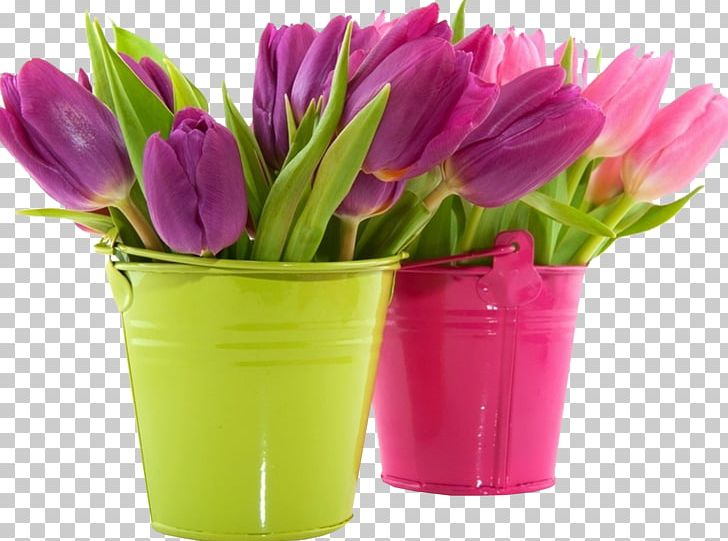Tulip Desktop Flower Pink Purple PNG, Clipart, Blue, Bucket, Color, Cut Flowers, Desktop Wallpaper Free PNG Download