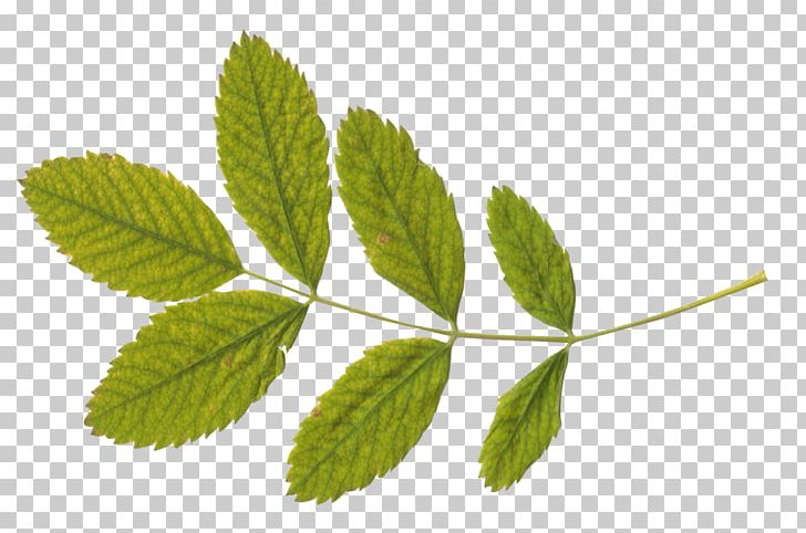 Autumn Leaf Color PNG, Clipart, Appbreeze, Art, Autumn Leaf Color, Baby, Beach Free PNG Download