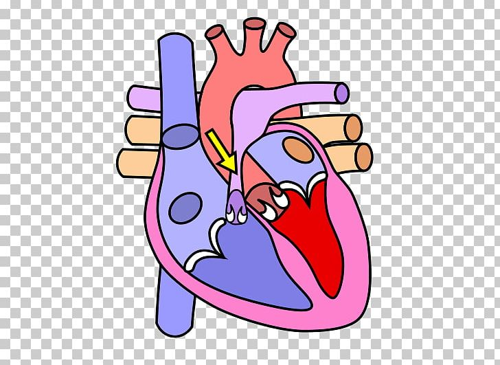 Heart Diagram Anatomy Human Body Circulatory System PNG ...