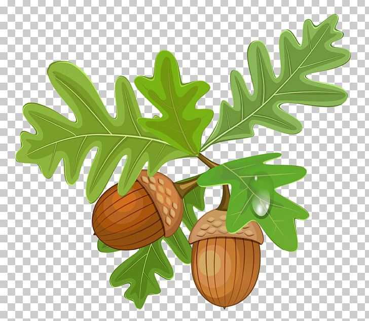 Acorn Autumn Leaf Color PNG, Clipart, Acorn, Autumn, Autumn Leaf Color, Clip Art, Drawing Free PNG Download