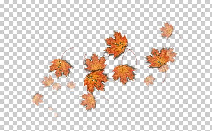 La Laitiere Et Le Pot Au Lait Knitting Automne Malade Wool Png Clipart Chrysanths Feuilles Flora