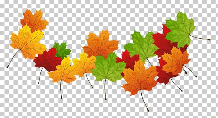 Autumn Leaf Color Autumn Leaves PNG, Clipart, Autumn, Autumn Leaf Color, Autumn Leaves, Desktop Wallpaper, Green Free PNG Download