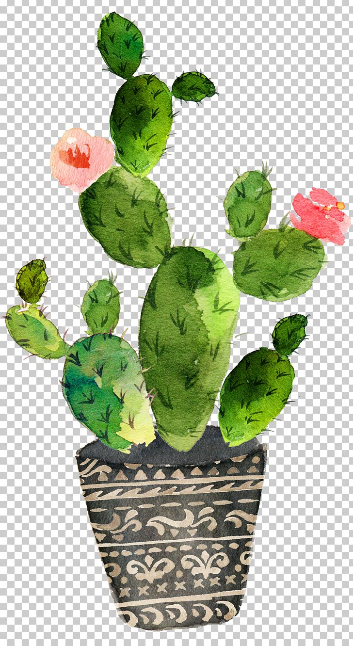 Cactaceae Watercolor Painting Succulent Plant PNG, Clipart, Art, Barbary Fig, Beautiful, Cactus, Cactus Free PNG Download