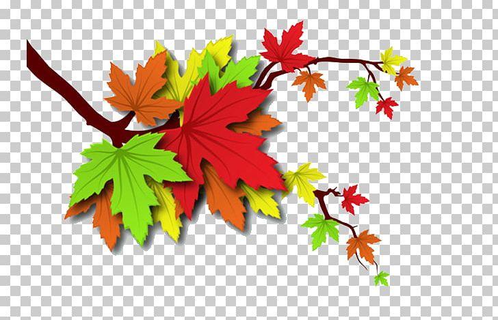 Autumn Leaves Leaf Illustration PNG, Clipart, Autumn, Autumn Leaf Color, Autumn Leaves, Autumn Tree, Download Free PNG Download