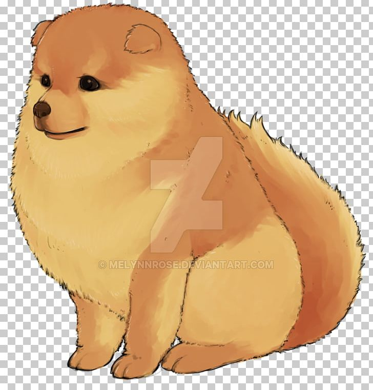 Pomeranian Puppy Dog Breed Whiskers Non Sporting Group Png Clipart