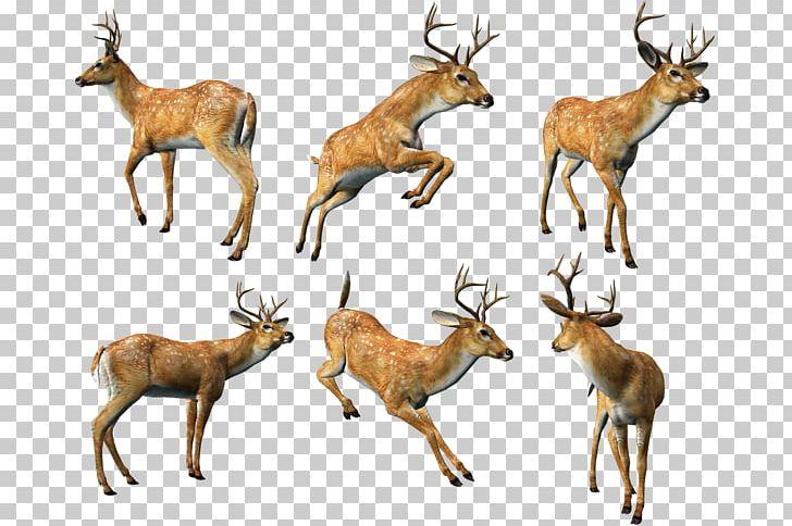 Reindeer Animal PNG, Clipart, 3d Computer Graphics, Animals, Antelope, Antler, Antlers Free PNG Download