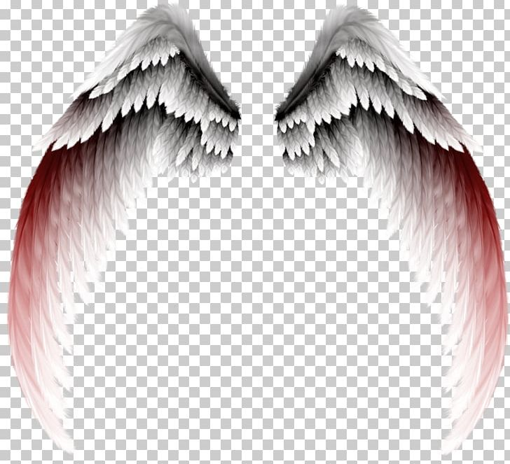 Photography PNG, Clipart, Angel, Angels, Angel Wing, Angel Wings, Change Free PNG Download