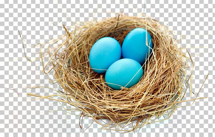 Nest Bird PNG, Clipart, Bird, Bird Nest, Bird Nest, Birds, Computer Icons Free PNG Download
