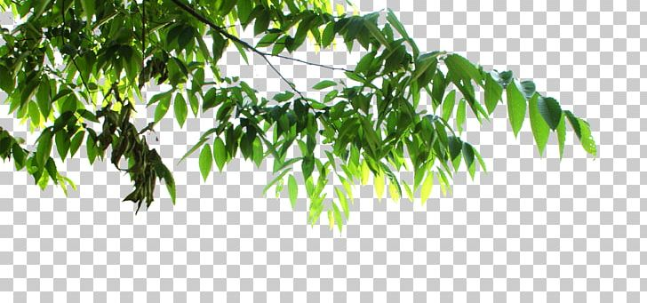 Tree Leaf Png Clipart Autumn Leaves Banana Leaves Branch Clip Art Color Free Png Download ✓ free for commercial use ✓ high quality images. tree leaf png clipart autumn leaves