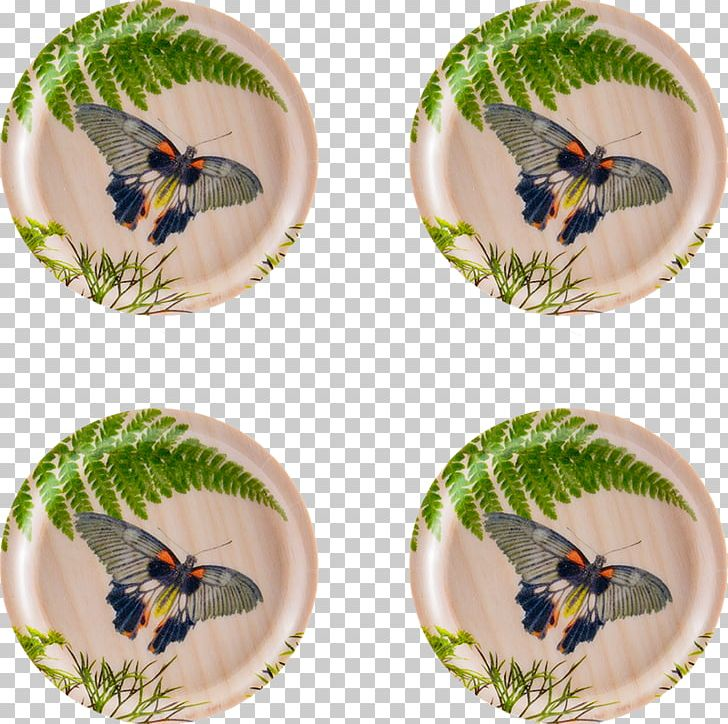Birch Coasters Dill Tray Insect PNG, Clipart, Beak, Birch, Coasters, Dill, Dishware Free PNG Download