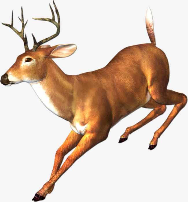 Deer running. Png clipart animal antlers