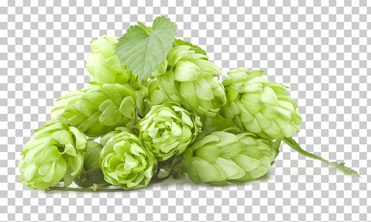 Beer Brewing Grains & Malts India Pale Ale Hops Brewery PNG, Clipart, Amarillo Hops, Amp, Beer, Beer Brewing, Beer Brewing Grains Malts Free PNG Download