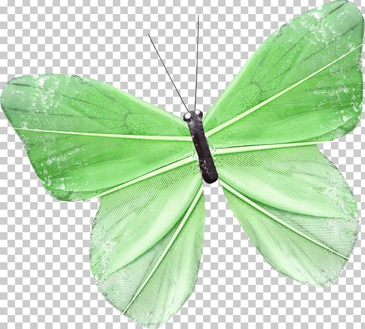 Brush-footed Butterflies Butterfly Pieridae PNG, Clipart, Arthropod, Brush Footed Butterflies, Brush Footed Butterfly, Butterflies And Moths, Butterfly Free PNG Download