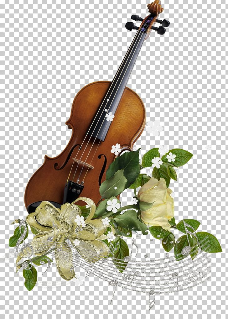 Violin Family Musical Instrument String Cello Png Clipart