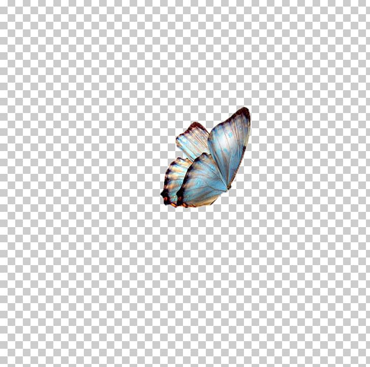 Butterfly PNG, Clipart, 3d Computer Graphics, Animals