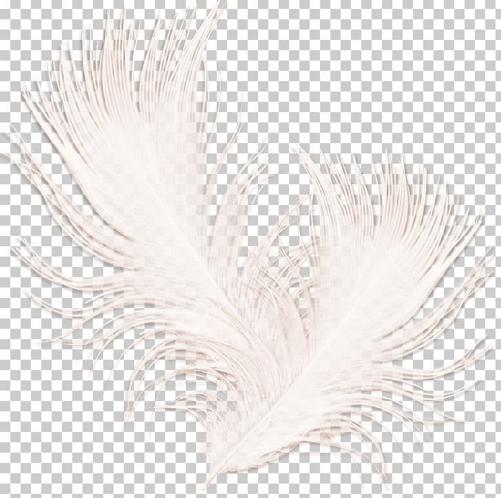 White Feather Black PNG, Clipart, Animals, Black, Black And White, Elements, Feather Free PNG Download