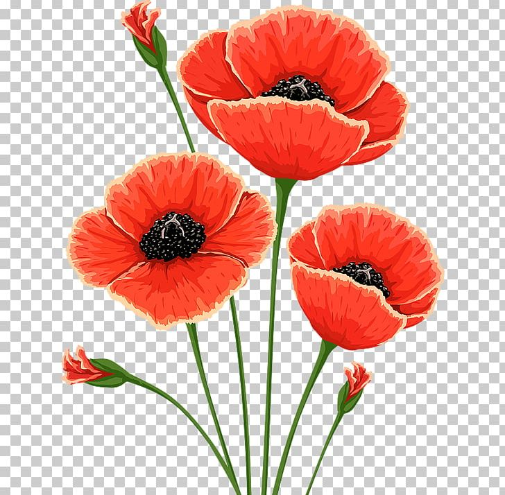 Common Poppy Flower Remembrance Poppy Poppies Png Clipart Common