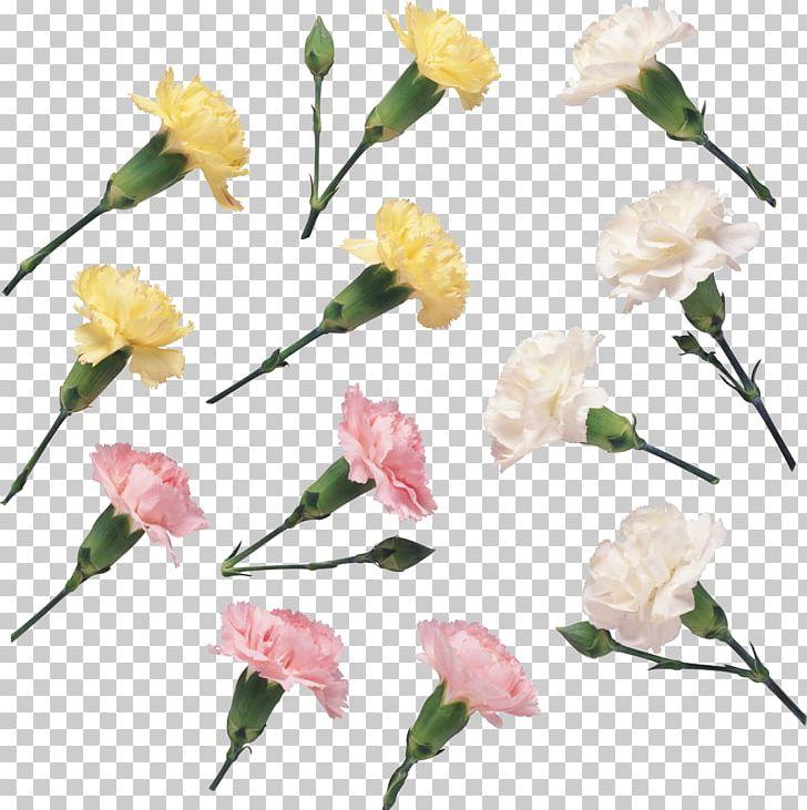 Floral Design Cut Flowers Petal PNG, Clipart, Branch, Carnation, Cicek, Cicek Resimleri, Cut Flowers Free PNG Download