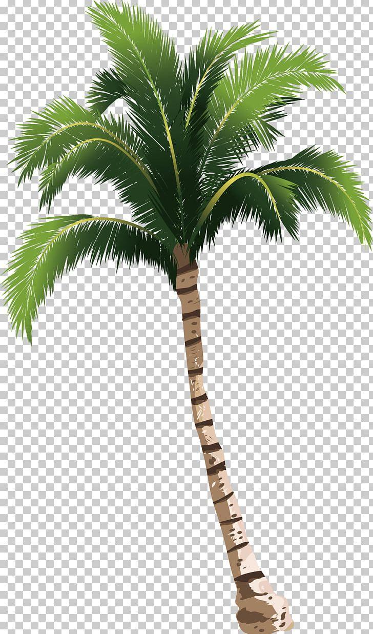 A Coconut Tree PNG, Clipart, 3d Computer Graphics, Arecaceae